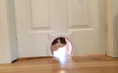 The Cat Door